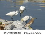 Group Of Water Birds At A Pond. ...