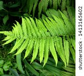 Macro Photo Of Green Fern...