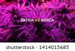 sativa or indica marijuana... | Shutterstock . vector #1414015685
