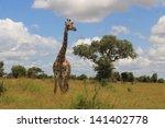 african mammal giraffe savannah ... | Shutterstock . vector #141402778