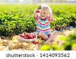 Child Picking Strawberry On...