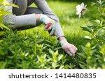 photo of gardener removing weed ... | Shutterstock . vector #1414480835