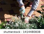 photo of gardener removing weed ... | Shutterstock . vector #1414480838