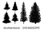 Silhouette Of Fir Or Pine Tree...