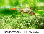Stock photo turtle jumps and catches the frisbee 141479662