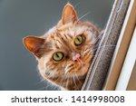 orange cat with green eyes... | Shutterstock . vector #1414998008