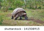 Stock photo galapagos tortoise 141508915