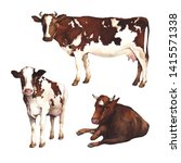 Watercolor Illustration. Cows...