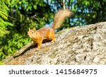 Squirrel On Rock In Nature....