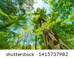super wide angle forest... | Shutterstock . vector #1415737982