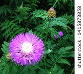 Macro Photo Of Nature Flower...