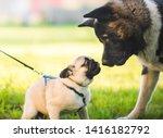 Big And Smalldog Playing...