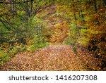 Oct. 30  2016. Forest Landscape ...