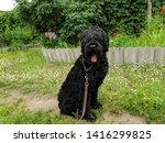big shaggy black dog. black... | Shutterstock . vector #1416299825
