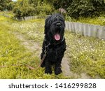 big shaggy black dog. black... | Shutterstock . vector #1416299828