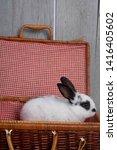 White And Black Colour Rabbit...