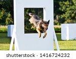 German Shepherd Working Dog ...