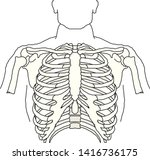 vector human rib cage symbol...   Shutterstock .eps vector #1416736175
