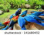 Beautiful Parrot Birds