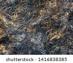 Burned Grass. Spring Fires....