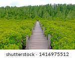 Nature Trail Wood Path Through...