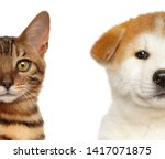 Stock photo kitten and puppy half face isolated white background baby animal theme 1417071875