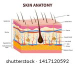 human skin. layered epidermis... | Shutterstock . vector #1417120592