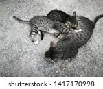 Stock photo the mother cat is feeding all kittens on the concrete floor breastfeeding from the mother s 1417170998