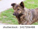 stray dog  big shaggy stray dog | Shutterstock . vector #1417206488
