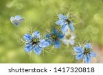 Blue Flowers Of Love In A Mist...