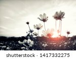 cosmos flower in the field at... | Shutterstock . vector #1417332275