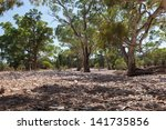 Dry River Bed. Flinders Ranges...