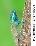 blue lizard with big eyes in...   Shutterstock . vector #141740095