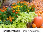 Fall Display Of Flowers And...
