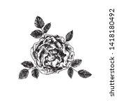 rose flower  leaves and blossom ... | Shutterstock .eps vector #1418180492
