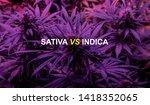 sativa or indica marijuana... | Shutterstock . vector #1418352065