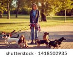 Stock photo professional dog walker happy dog enjoying in walk city 1418502935