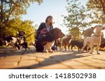 Stock photo happy girl walking and playing with their dogs while out on a walk 1418502938