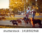Stock photo happy couple dog walker walking with a group dogs in the city 1418502968