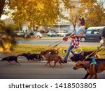 Stock photo smiling girl dog walker with dogs enjoying in walk city 1418503805