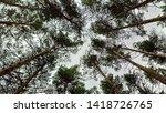 pine forest at burabay resort | Shutterstock . vector #1418726765