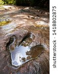 A Fossilized Footprint Of A...