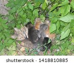 Stock photo stray cat with her kittens in nest 1418810885