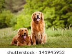 Stock photo portrait of a two dogs 141945952