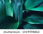 dark leaves background blue...   Shutterstock . vector #1419598862