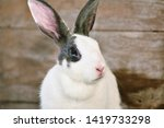 grey bunny rabbit looking... | Shutterstock . vector #1419733298
