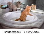 Stock photo little kittens bathing in the sink 141990058