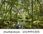 a picturesque river at low tide ... | Shutterstock . vector #1419991505