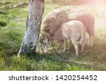 Rural Scene With Three Farm...