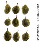various durian isolated on... | Shutterstock . vector #1420302485